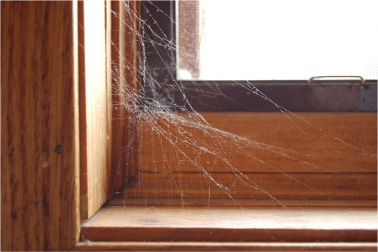 photo of a common house spider web