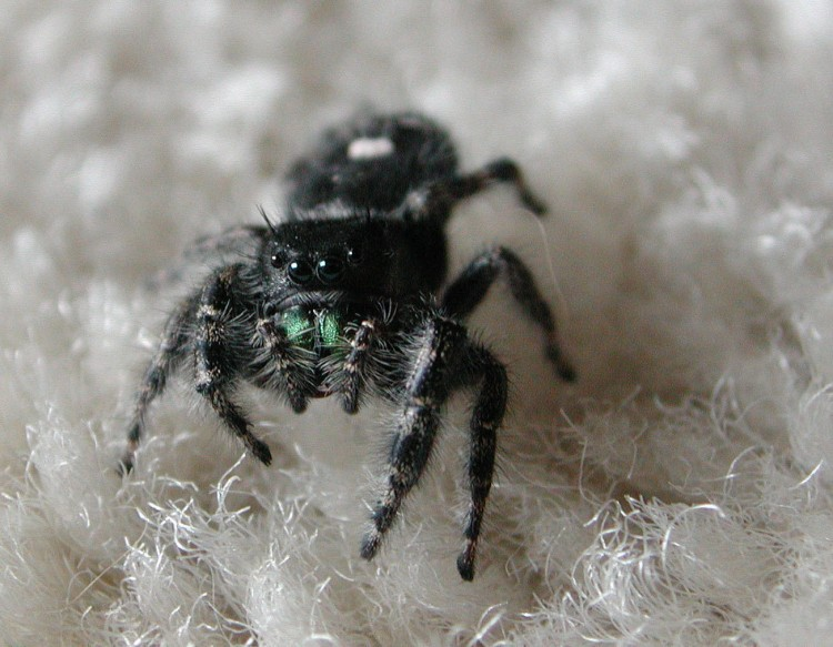 photo of bold jumper on the carpet