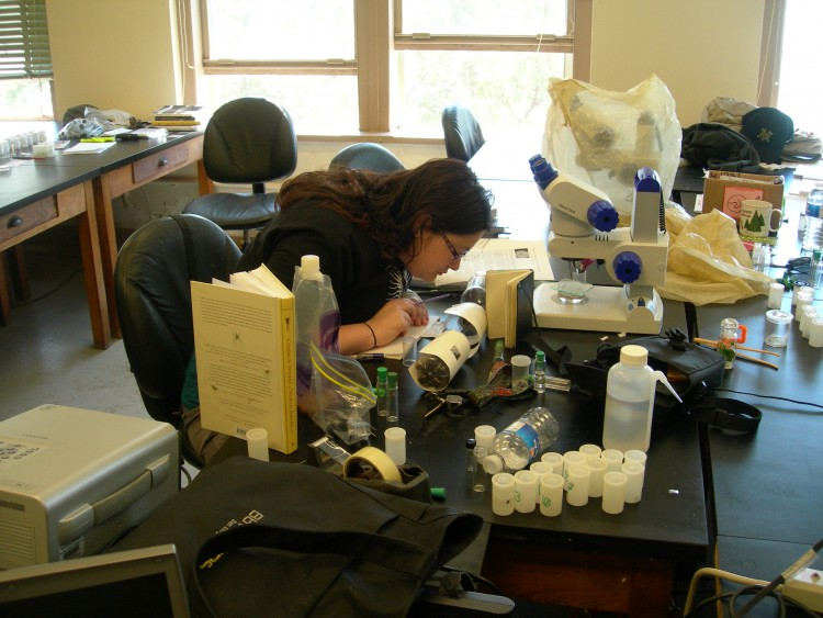 Sara Klips observing jumping spider behavior as part of her research project
