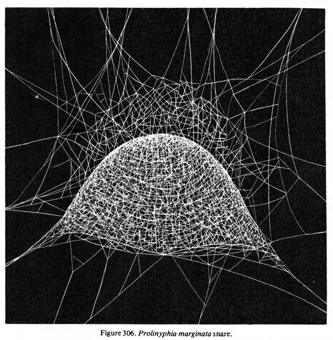 illustration of a filmy dome spider's web, from B.J. Kaston's How to Know the Spiders