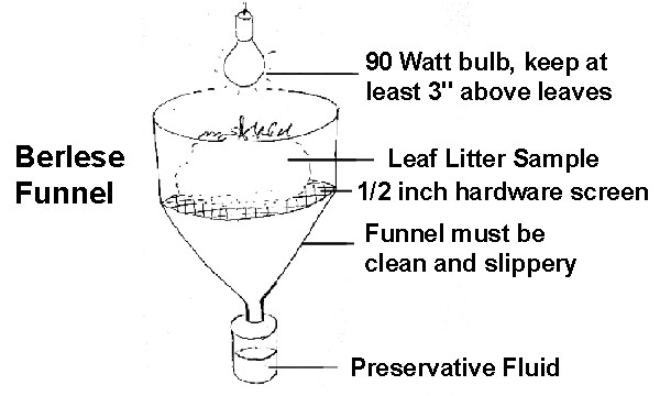 diagram of Berlese funnel apparatus