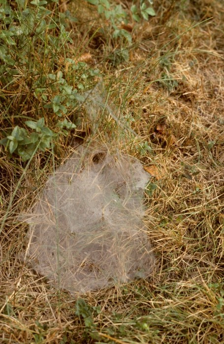 photo of grass spider web
