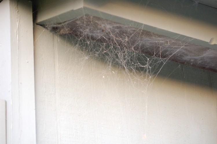 photo of dusty common  house spider web