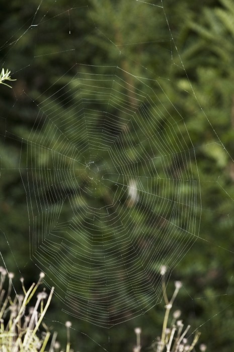 photo of an orb web