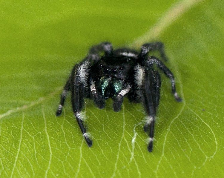 photo of male bold jumper