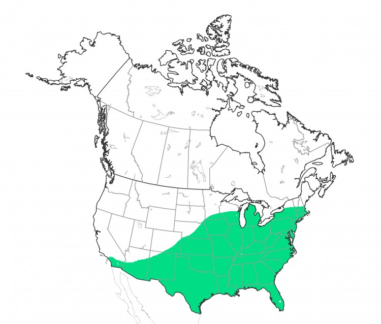 distribution map of Neoscona crucifera in North America, north of Mexico