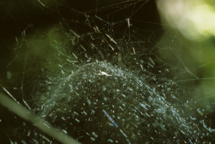 filmy-dome spider's web