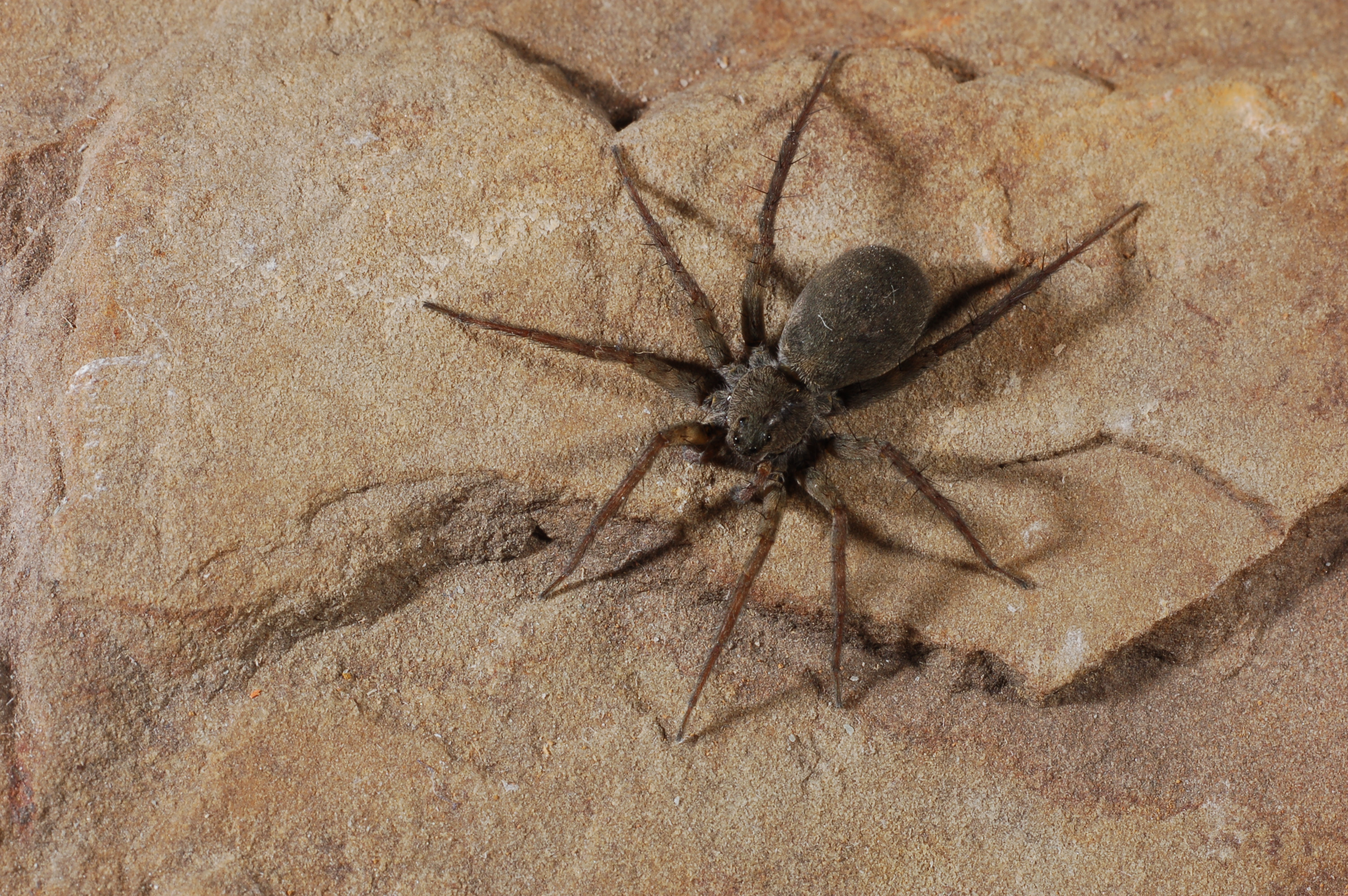spidering on Gibraltar Island | spidersrule