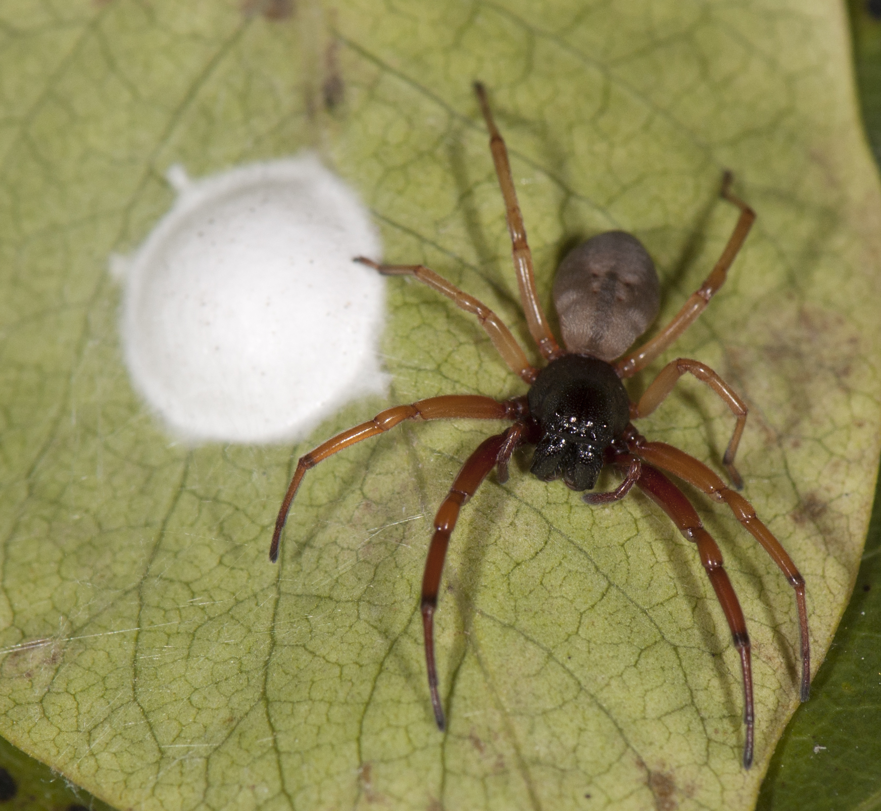 Spiders In Winter Spidersrule