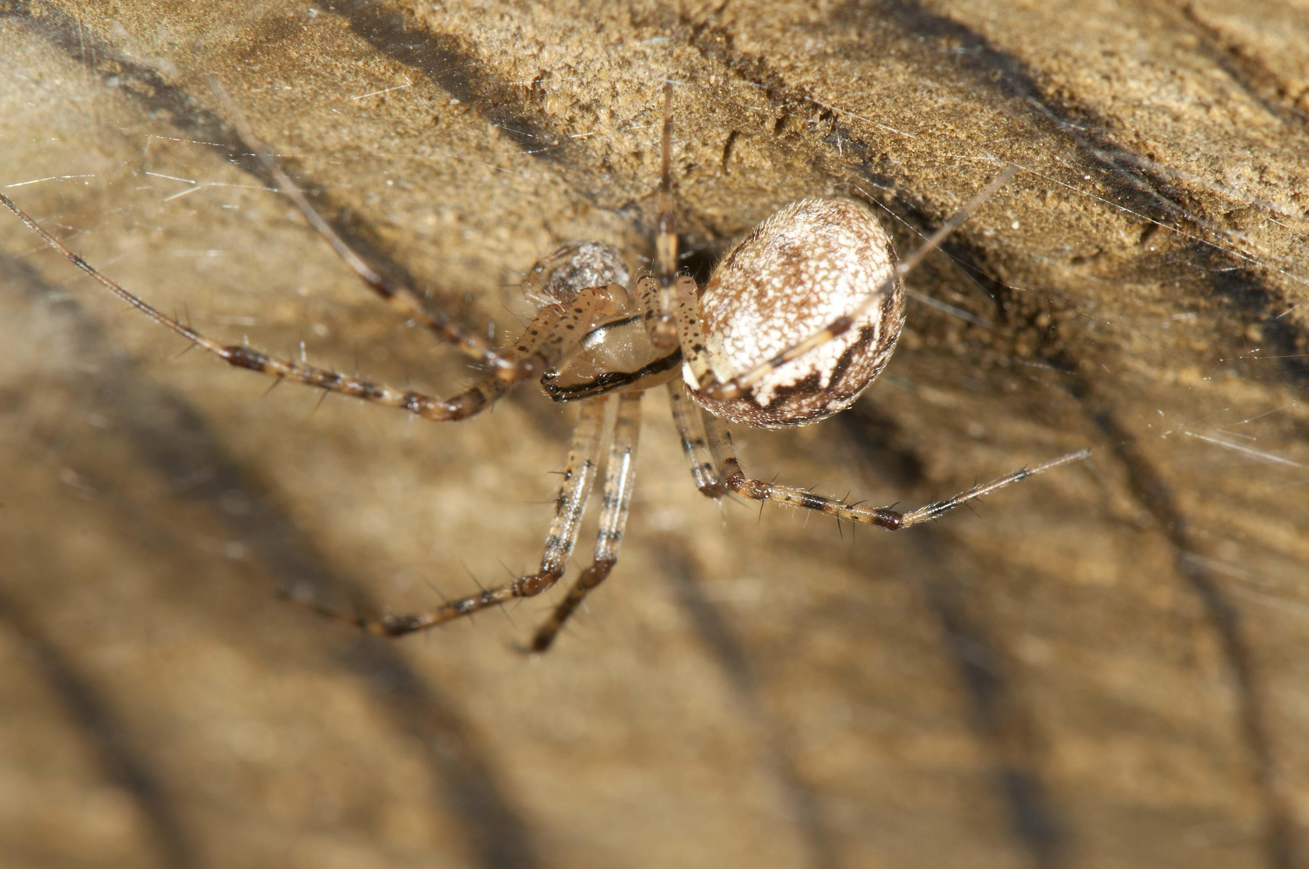 Common Names | spidersrule