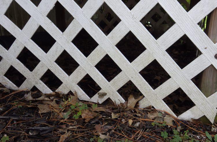 a garden lattice