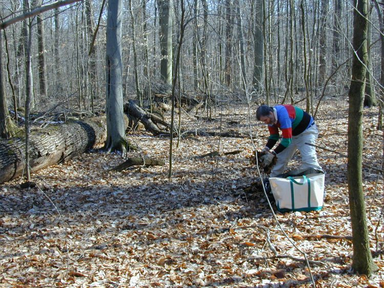 RAB collecting litter at Johnson Woods Nature Preserve, Wayne County, Ohio